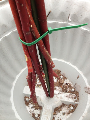 Provide stability to twig bundles by putting a stake through the bottom of the pot -- The Impatient Gardener