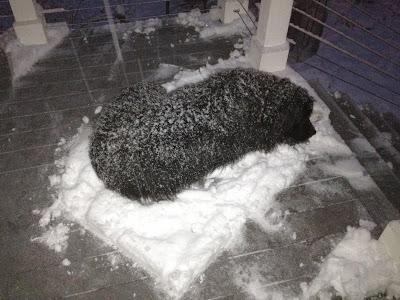 snow mattress