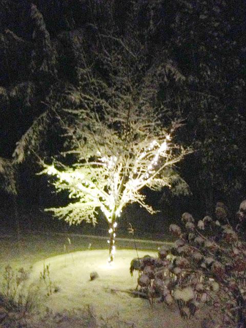 snow covered tree -- The Impatient Gardener