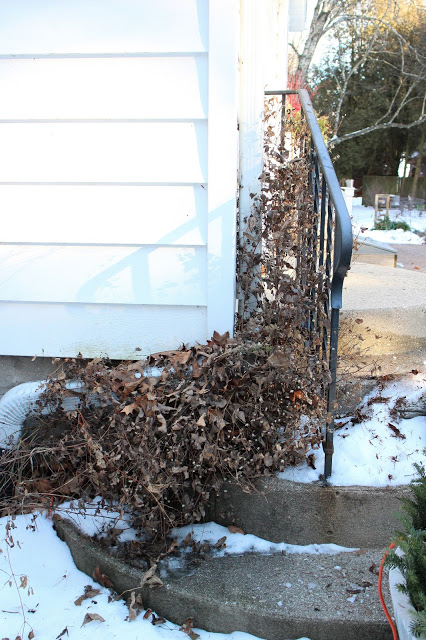 Leave perennials standing for winter to improve hardiness -- The Impatient Gardener
