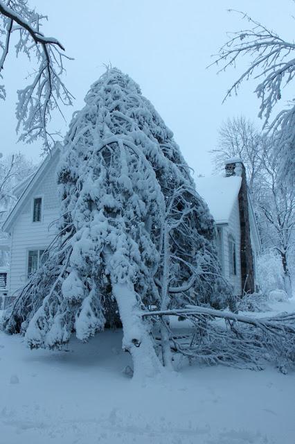 cedar fallen on house