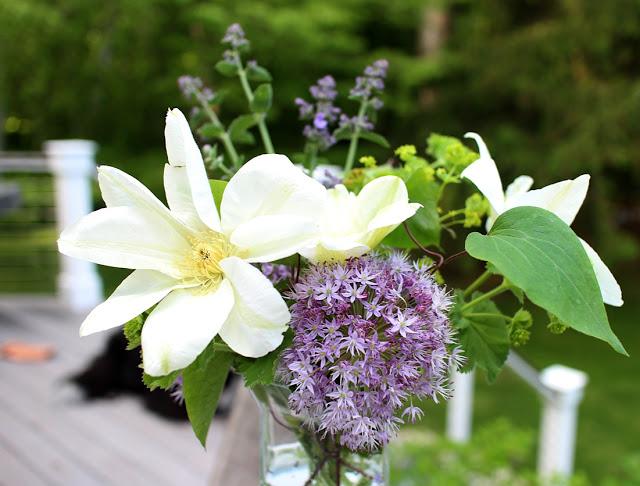 The Impatient Gardener -- Garden Appreciation Society Week 6 Guernsey Cream clematis, allium, lady's mantle, nepeta