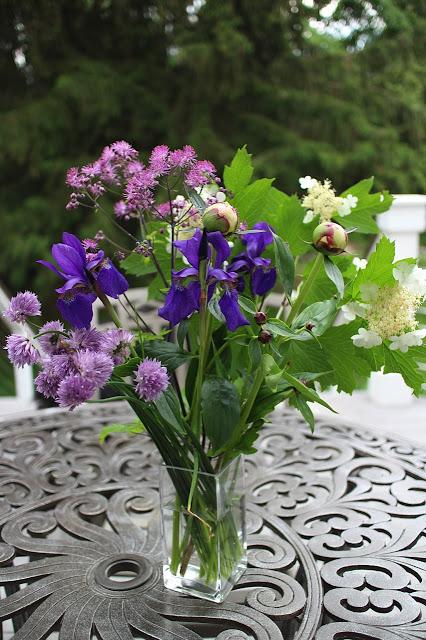 The Garden Appreciation Society -- Thalictrum, iris, viburnum, chives