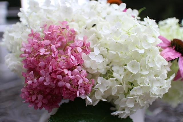 The Impatient Gardener -- The Garden Appreciation Society -- Annabelle hydrangea, Invicibelle Spirit hydrangea, echinacea