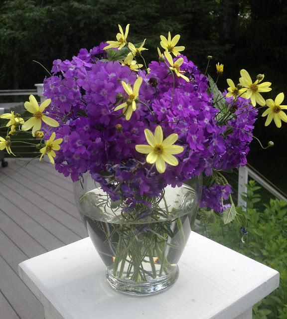 The Impatient Gardener's Garden Appreciation Society -- Superbena Violet Ice and Coreopsis 'Moonbeam'