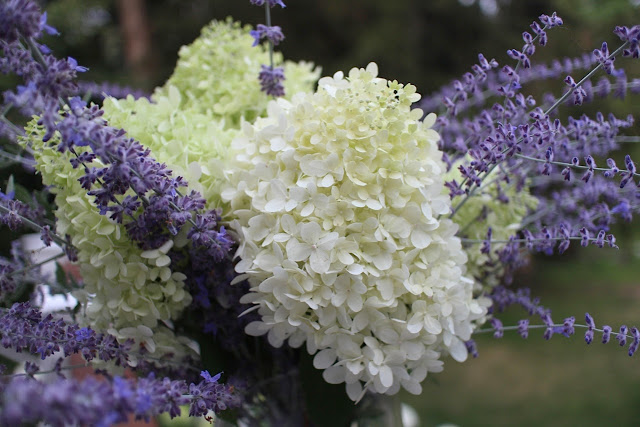 The Garden Appreciation Society, The Impatient Gardener, Limelight hydrangea + Russian sage