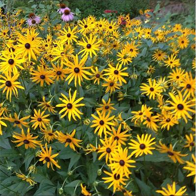 The Impatient Gardener 2-minute garden tour