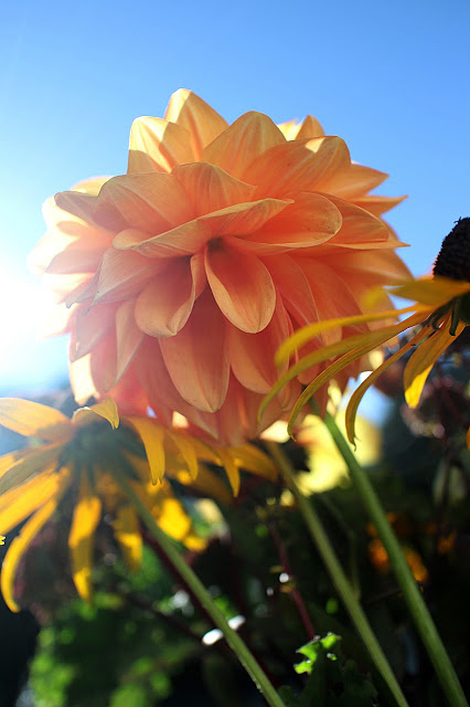 The Impatient Gardener -- The Garden Appreciation Society