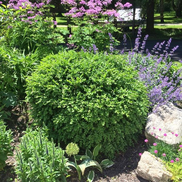 Garden Trends On Track For 2018