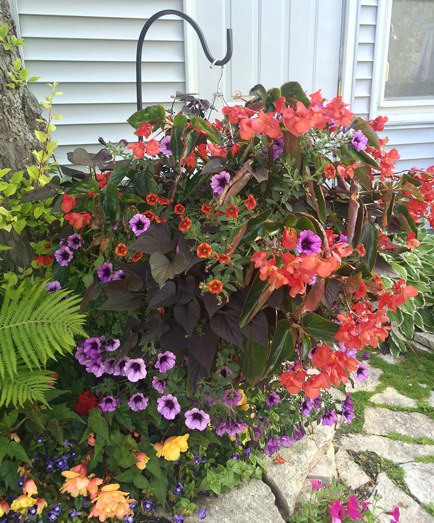 Mackinac Island gardens: The Impatient Gardener