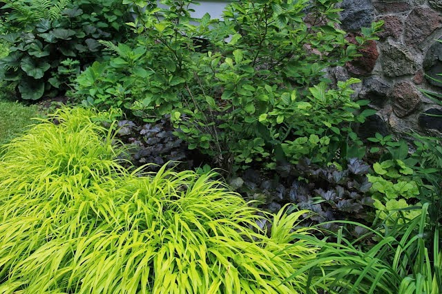 Hakonechloa: A perennial I wouldn't be without