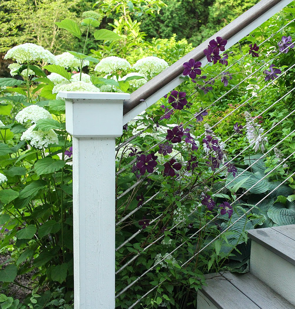 Clematis: A perennial I wouldn't be without