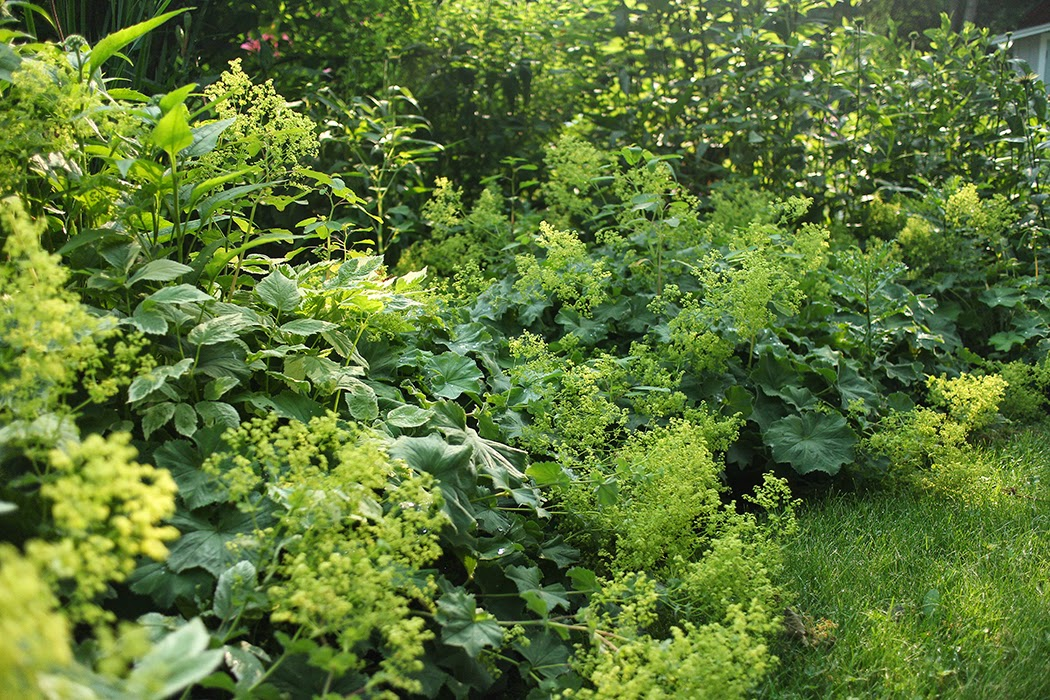 five perennials i d never be without the impatient gardener