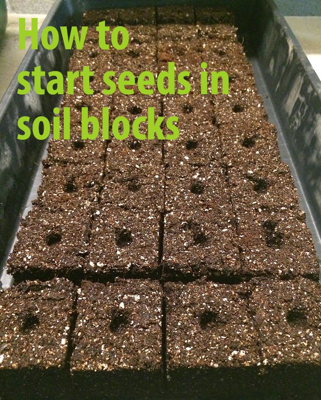 soil block Archives | The Impatient Gardener