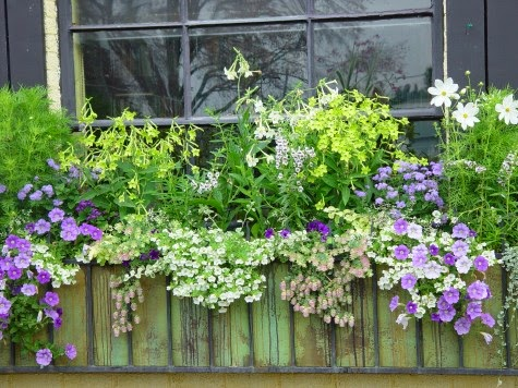 Deborah Silver Used A Restrained Color Palette In This Wild And Wooly Window  Box. Lime, White, Lavender And A Tinge Of Pink. Thatu0027s It. Deborah Silver  Photo