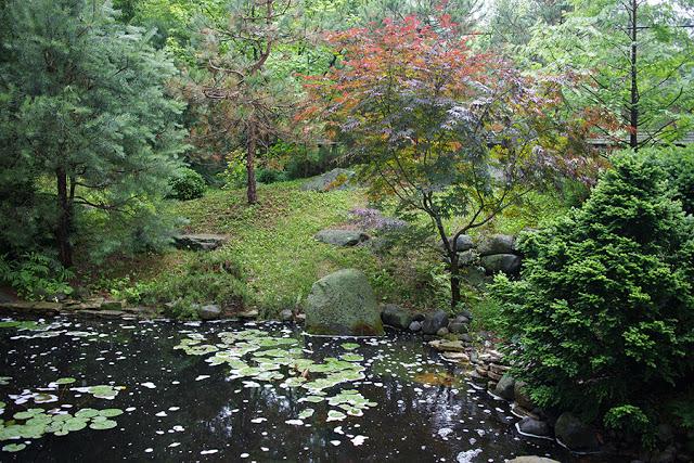 idyllic back yard pond