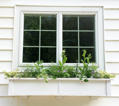 Window box planting 2015