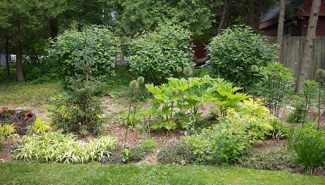 arrowwood viburnums