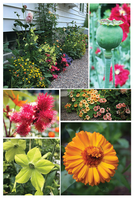 5 flowers that are dead simple to grow from seed the impatient gardener. Black Bedroom Furniture Sets. Home Design Ideas