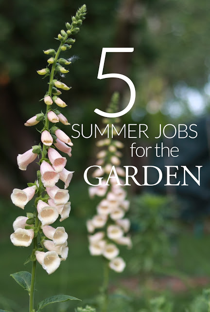 5 jobs to be doing in your garden now