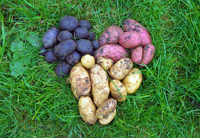http://lovelygreens.com/2017/07/when-to-harvest-potatoes.html