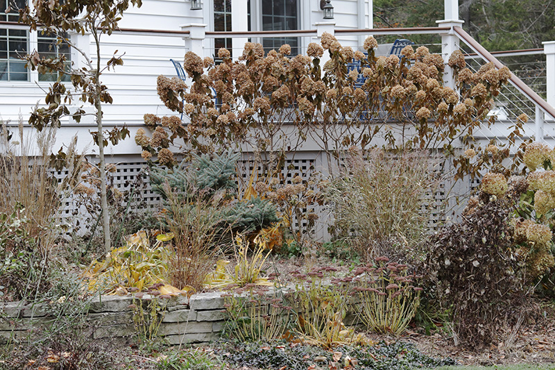 Fall garden in shades of brown