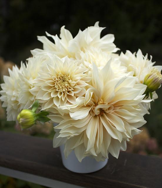 'Cafe au Lait' dahlia bouquet