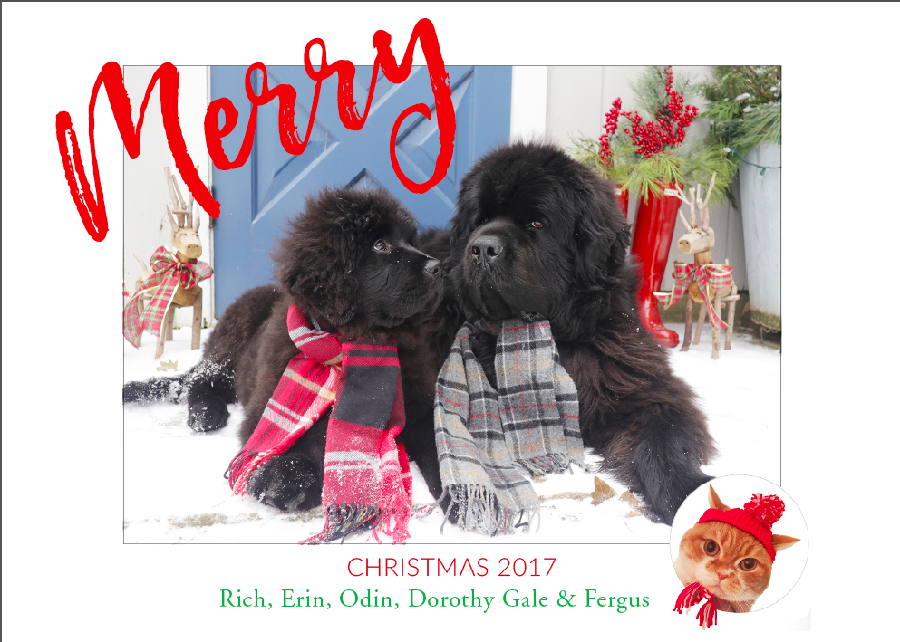 Newfoundlands on Christmas card