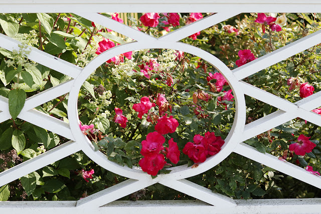 charming fence with roses
