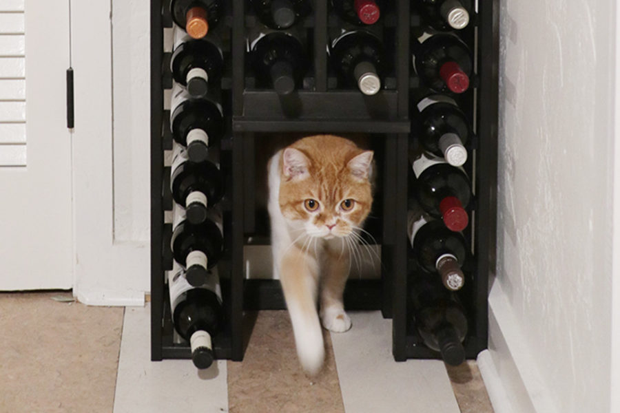 wine rack with a secret