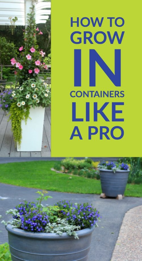 Grow in containers like a pro