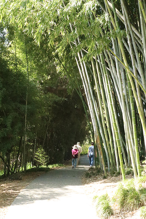 huntington bamboo grove