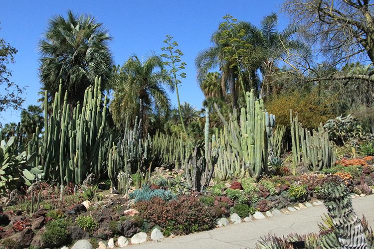 Huntington cacti desert garden