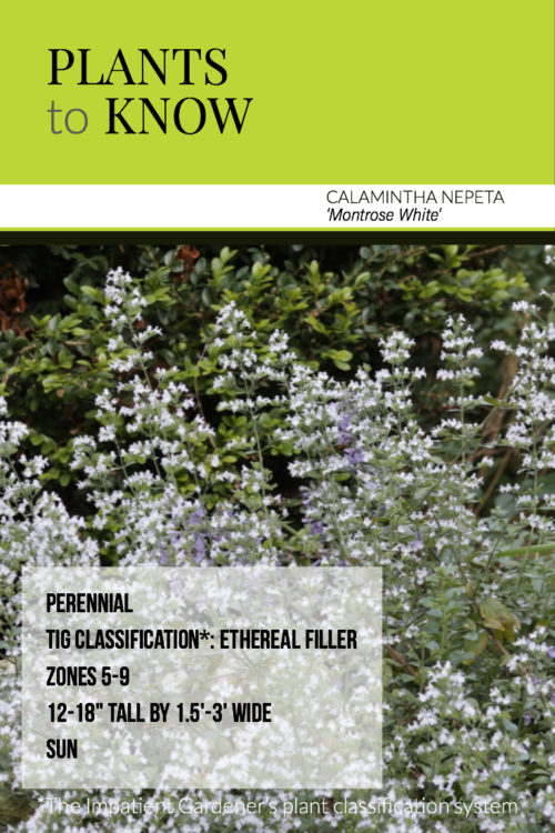 Plant To Know Calamintha Nepeta Montrose White The Impatient