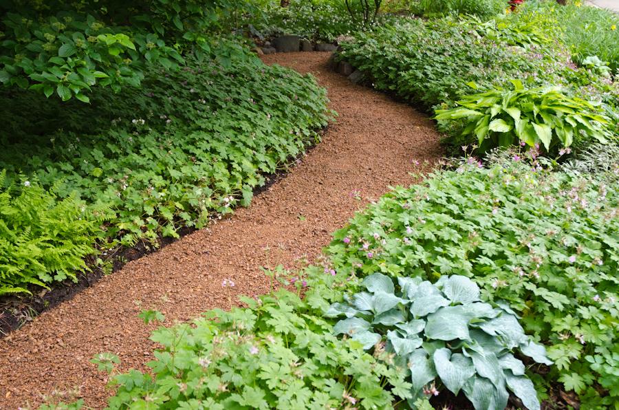 Geranium macrorrhizum lining a path