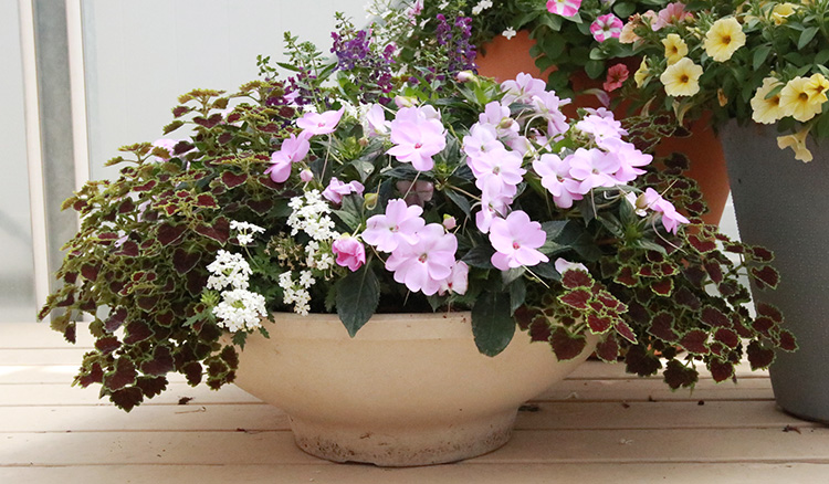 low container with impatiens