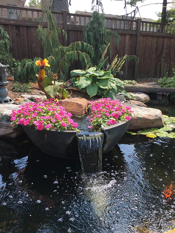 impatiens in water garden
