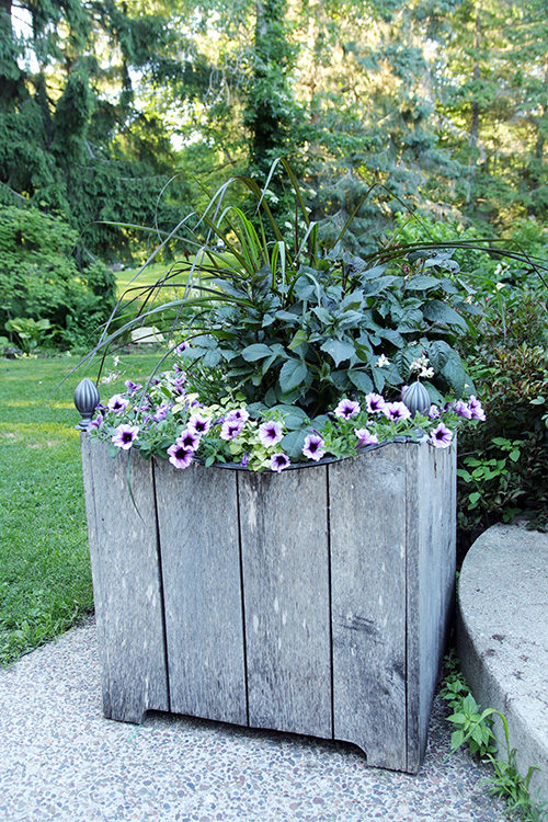 Large container planting