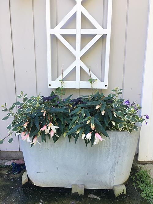 shade planter