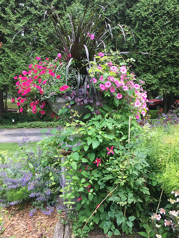 pink urn planting