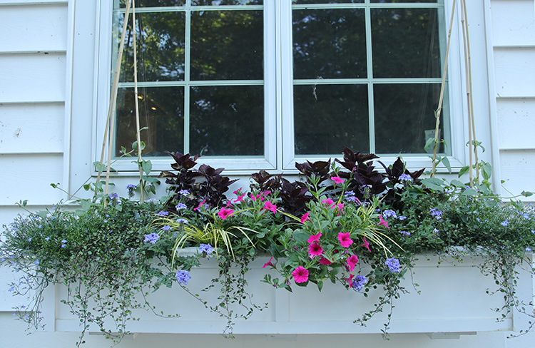 Window box recently plantd