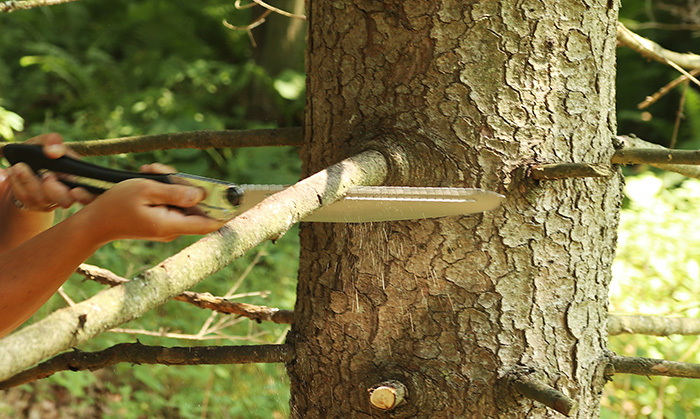 how to prune a branch