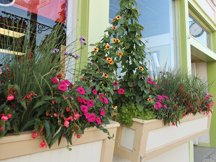 window boxes thunbergia