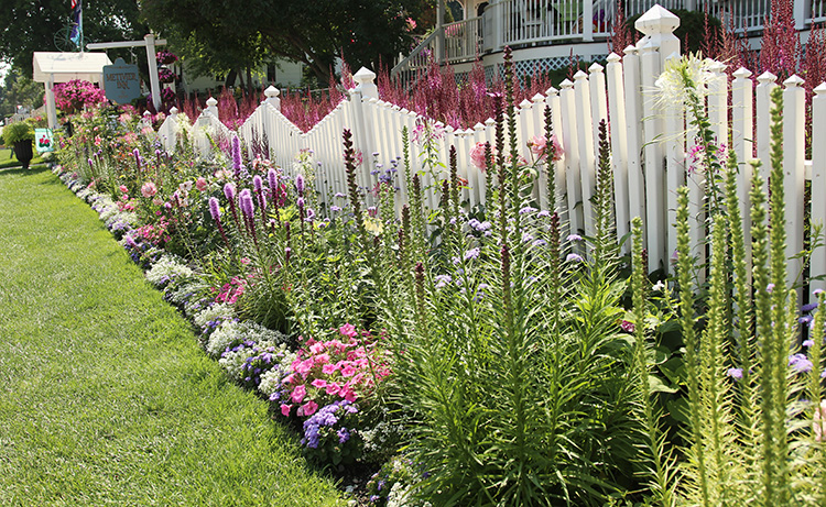 pink fence planting