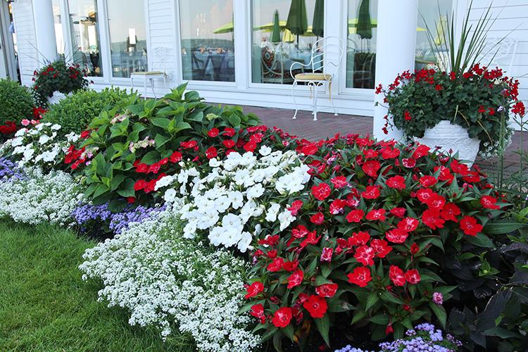 patriotic garden planting