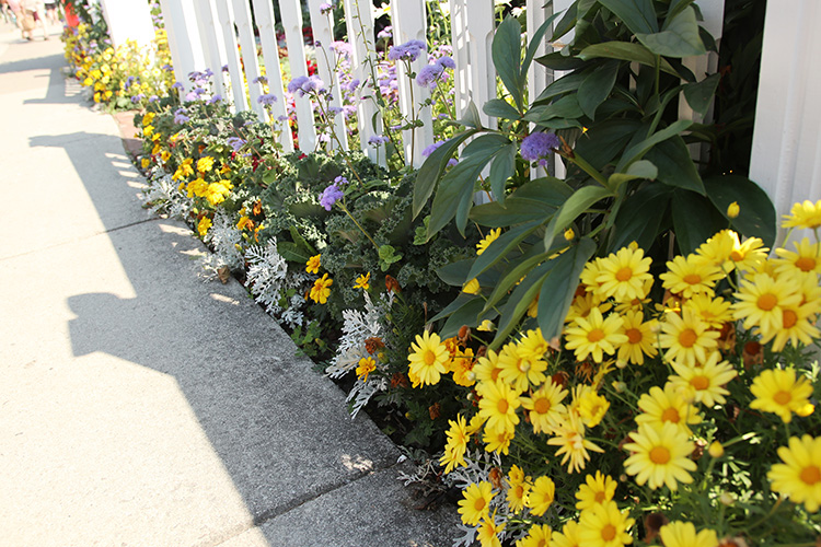 daisy walkway