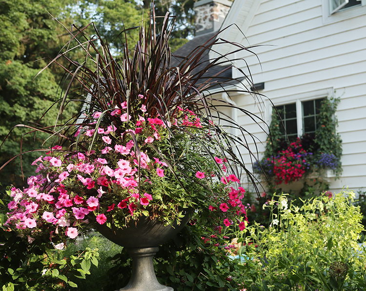 Hot pink container plantings