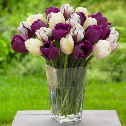 This tulip mix is a pre-built combo of dark purple, cream and striped tulips