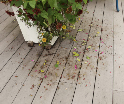 Decks gets stained and dirty from plant residue. Clean it all up in fall.