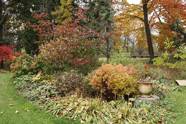Fall color in the garden.
